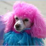 chien coloré