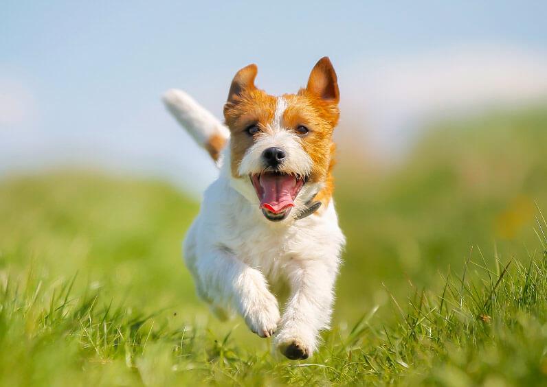 chien en parfaite santé