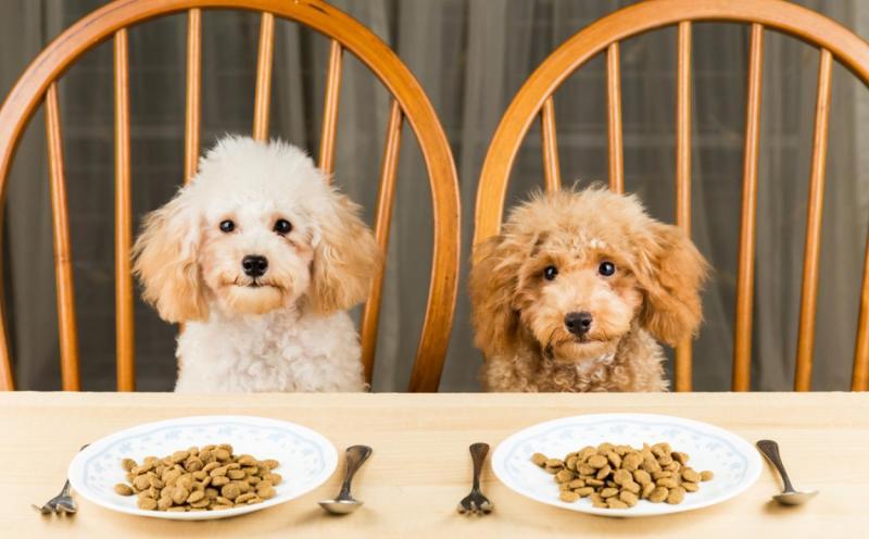 chiens qui mangent