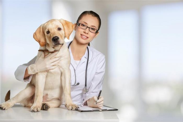 soins de prévention pour chiens