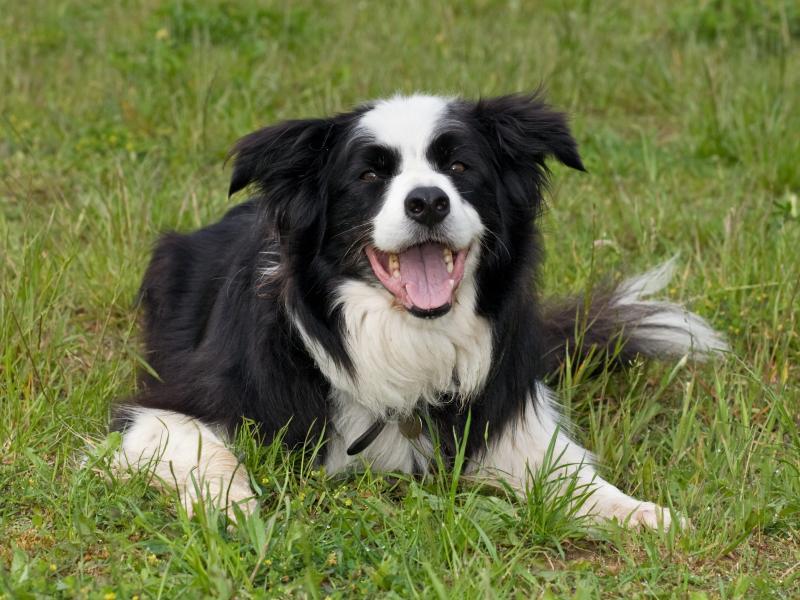 chien adolescent