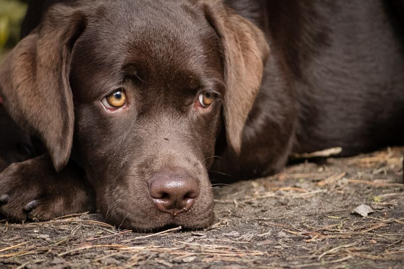 chien en sécurité quand il est seul