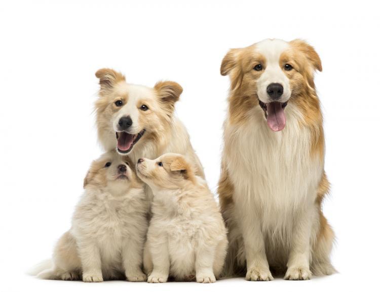 chiens en parfaite santé