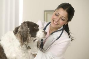 vétérinaire avec un chien