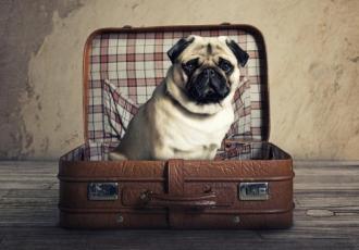 aller à l hotel avec son chien