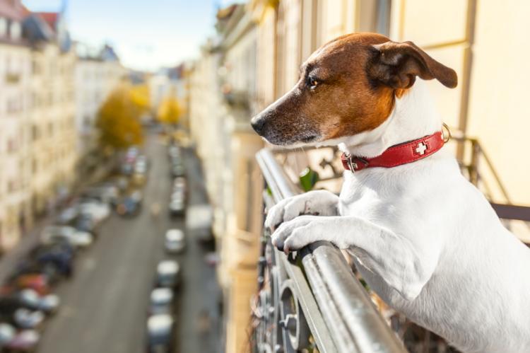 chien balcon