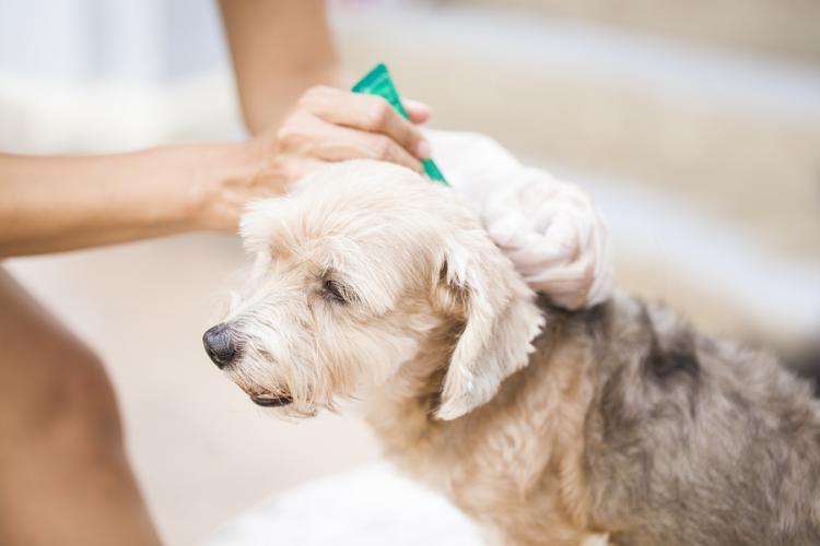 prévention tique et puce chien