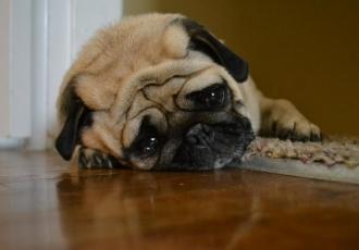 chien triste dépression