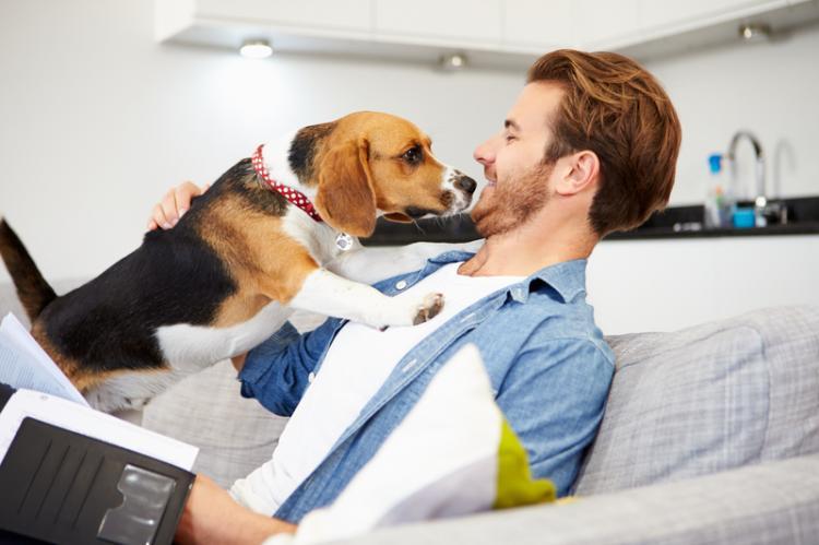 couverture de base de l'assurance chien