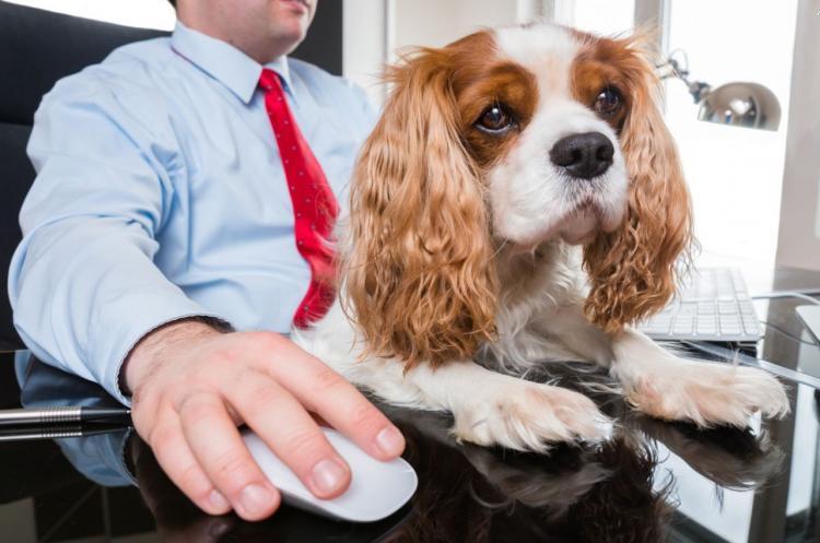 mutuelle chien avantage entreprise