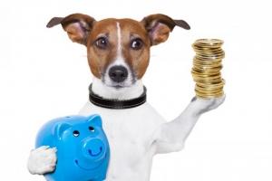 astuce economie assurance chien