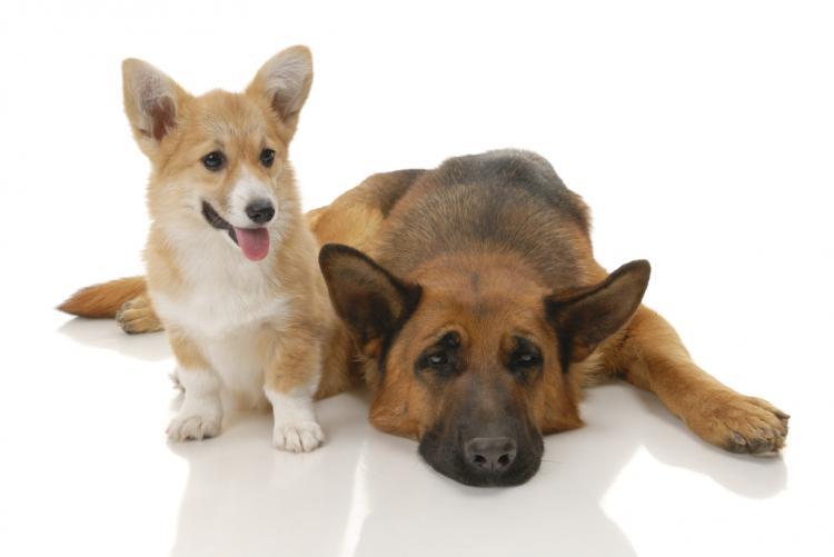 informations mutuelles pour chiens