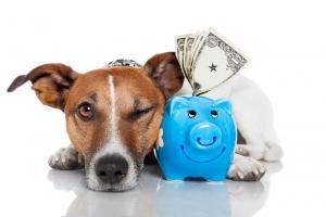 mutuelles pour chiens formules de base