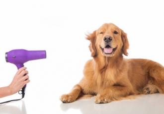 perte de poils chez le chien